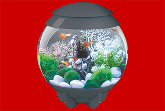 biOrb HALO 15 Aquarium